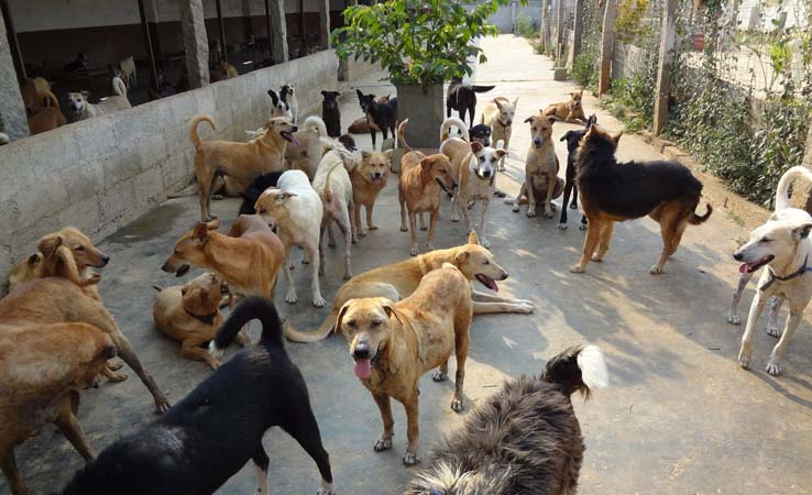 maruti-dog-shelter